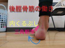 後脛骨筋の働き